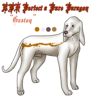 UK Ch. EBH Perfect a Pure Paragon JH FTE NA UAJ by ZAR-kennels