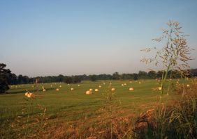 Normal Pasture Hay by Dramier