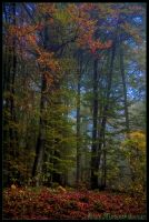 Colors_of_Autumn by allym007