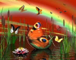 Butterfly boat by Bambolay