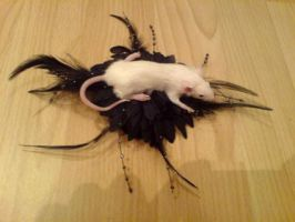 Taxidermy Mouse Brooch by amandas-autopsies