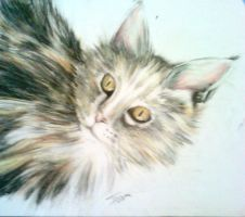 My firt try working with pastels! by turanneth