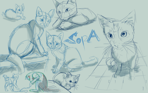 Sketch training - Sora the kitten by seantriana