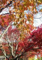 Colors Of Fall by LadyAriessTemptra