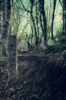 Woodland background stock 1 by A68Stock