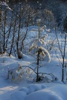 Snow-covered wood by Hudojnica