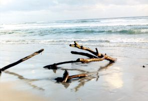 Driftwood by Armenius
