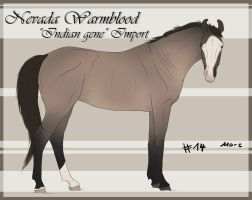 Nevada Wamrblood indian gene Import 14 by BRls-love-is-MY-Live