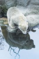 Mama polar bear watching over one of her babies by mbaert