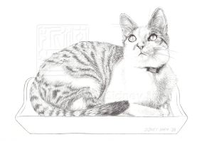 1st Cat Drawing... by Teru-teruMomiji