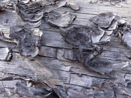Wood texture 005 by AnnFrost-stock