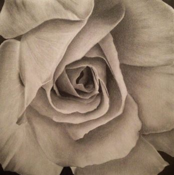 Just another drawing of a Rose~ by karlalii