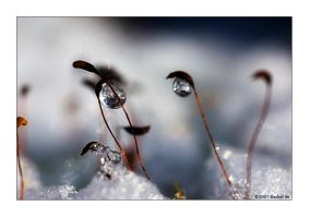 Winter Moss I by butterfly36rs