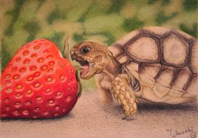 A tortoise for my mother by Schiraki