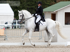 Dressage Cup_162 by CalyHoney