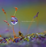 Home Sweet Home .. by diensilver
