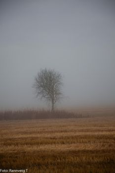 tree in  the fog by RannveigT