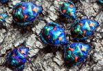 Harlequin Bugs by possumbrush