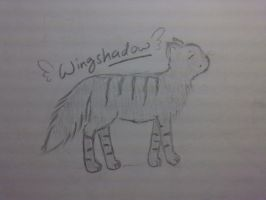 +AT+ Wingshadow OC sketch by SunsetAtDusk