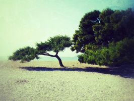 trees at the beach by georgmaxklein