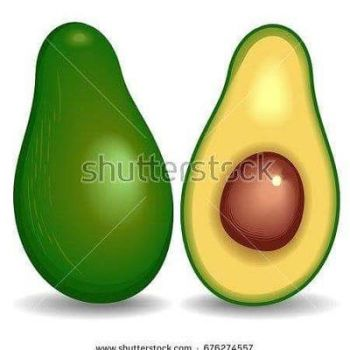 Avocado  Vector  BluedarkArtCopyright by Bluedarkat