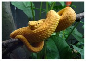 Yellow Snake by DamnedHonesty