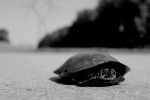 turtle 5 by bobbyfufu