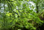 green... by fastidious-cat