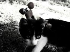 Cat vs. Mouse by oliverdrop