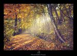 ...the autumn pathway... by canismaioris
