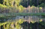 Watershed Pond by WriteTimeWrongPlace