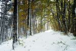 Forest  and snow by rdalpes