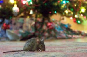 Not a Creature was Stirring by J3sca