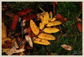 Colors of the Fall by Demondes