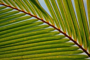 .palmfrond WP by Snapperz