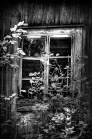 Window by alelar