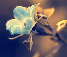 Blue Flower by boxx2genetica-stock