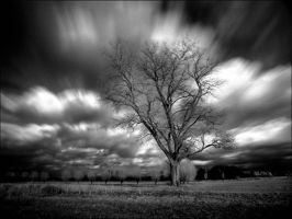 Home Tree infrared... by MichiLauke