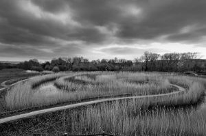 Heart of Reeds 2786 by filmwaster