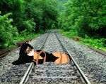 REQUEST: Night Kitten on the Tracks by SubMelissa