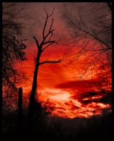 The Old Tree At Sunrise by bamako