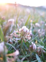 Early flower by Evelin8