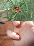 Ladybird friend by Jellybean-Ninja