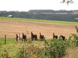 Horses Collection: Grouped 3 by Germanstock