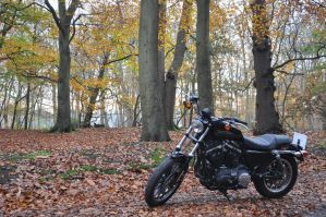 Harley 883R  VI by Rip-Stick-Racer