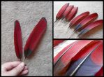 White-Cheeked Turaco Wing Feathers by CabinetCuriosities