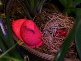 Peep Nest by onlyono