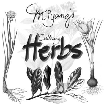 culinary herbs by miyang by miyang