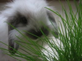 Baby bunny and grass by Twilightberry