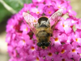 Bee 03 July 2015 (4) by 69raywwf